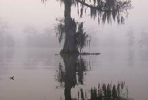 Louisiana Board