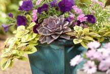 Container Gardening / by Margi Wangaard