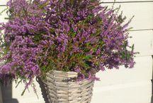 blomster i min hage / peoner