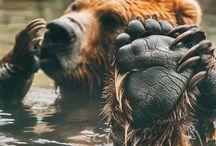 ~ Bears ~ / • brave •