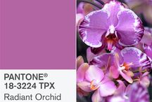 Pantone Colour of 2014 / The colour of the year is 18-3224 Radiant Orchid! Let's see it in use.