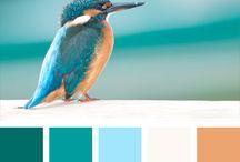 Kleur balans