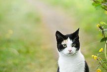 gatti & co