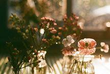 kytice, polní a sušené květiny