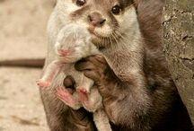 Awwww!! / Cutie patooties.