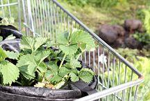 Oravankesäpesä | kasvit