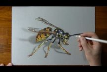 painting and drawing insects