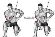 biceps , triceps, men