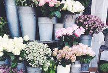 F L O R A / flower power
