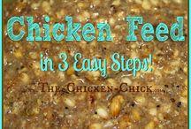 Chicken Secrets