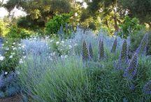 Jardin azul