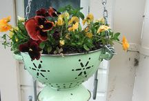 Potted Posies