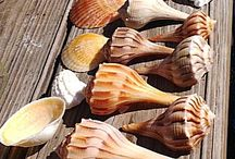 BEACH -materials