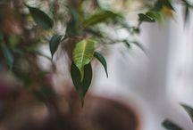 My green photos