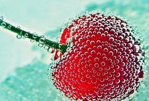 Aqua et rouge