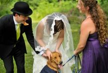 Wedding Dogs / I love seeing dogs at weddings. The love they bring to a family is unsurpassed. / by Ginger Lou's