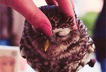 Owl fusses