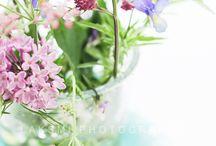 flowers & plants / flowers & plants