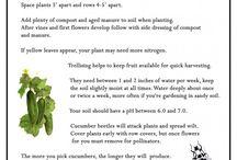 Green fingers / Ideas