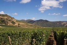 Select Vineyards Around the World
