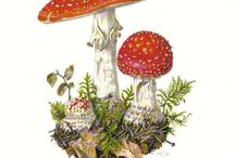 Mushrooms / Mushrooms in real life, art, craft