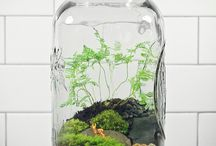 Tiny Gardens / by Tiffany Kennedy