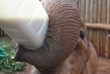 Elephants - DSWT / by Kathy Mosteller