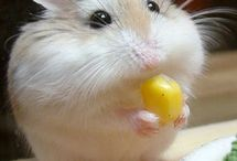 Hamster / Photos, inspirations, diys and more