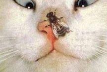 Aranyos macskák
