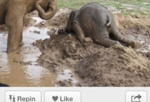 funny animals❤love elephants