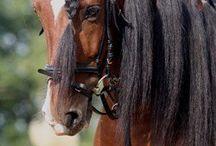 Horses - Гривы, хвосты