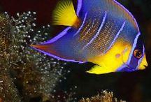 Marine Fish & Inverts