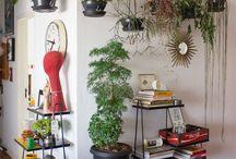 plants dentro de casa