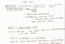 Anatomy notes and diagrams / the cell - overview