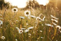 • MEADOW • / by LINEN and CLAY