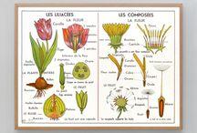 Bitki çizimi