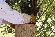 Beehive - Arıcılık