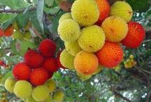 Fruits / by snehitha seshadri