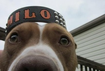 Bully Mart  Models / Pups and their peepz modeling their Bully Mart goods.