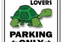 Love my Turtles!!