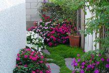 plante și gradini