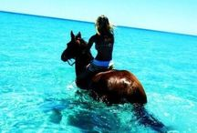 Let The Adventure Begin / Put the horse in the trailer, jump in the divers seat and have an adventure!