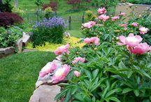 Gardening Ideas & Wishlist