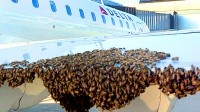 check out all these bees.