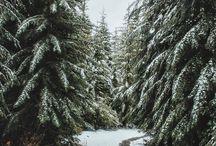 Winter vibes✨