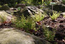 ogrody botaniczne