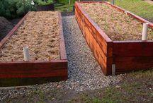 veggie gardens ideas / For my vegie patch
