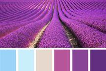 Renklerin cazibesi