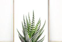 Botanical Prints / Tropical Plants and Succulent Prints
