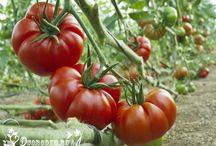Садоводство огород